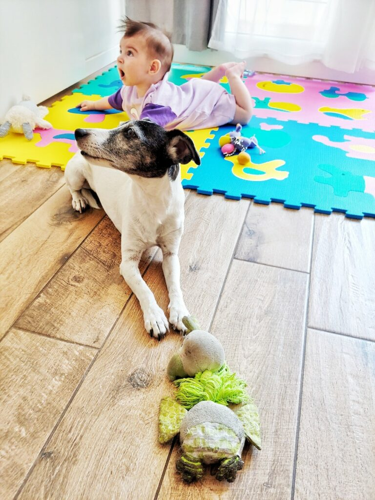 Small dog pet siting with a child in a childminder's house